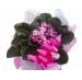 violeta enfeitada