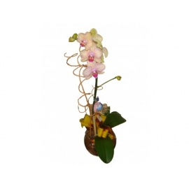 vidro c/ orquídea phalaenopsis