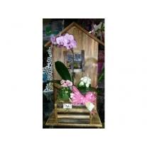 cachepô com mini-orquídea e mini-kalandivas